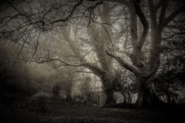 Halloween griezelig bos