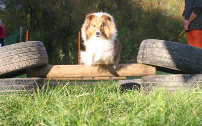 hond rent en springt in agile parcours