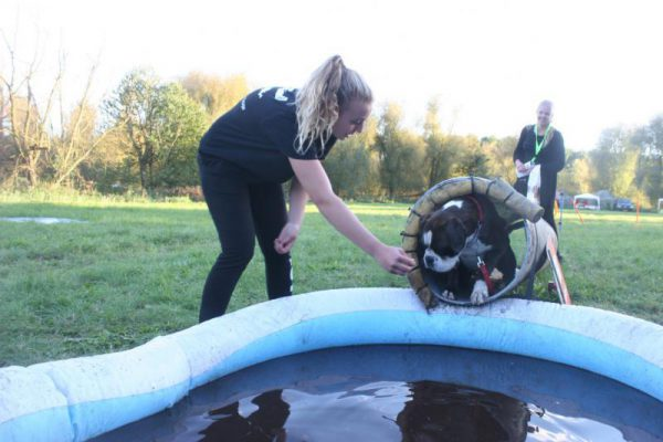 hond bij zwembad tijdens dierendag