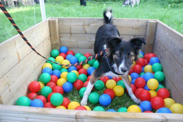 hond in ballenbak tijdens dierendag in Almere