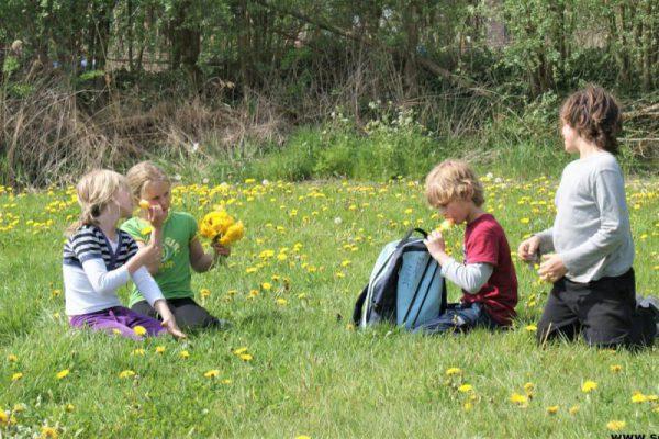 kinderen op grasveld